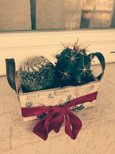 Old cactus yaaaa