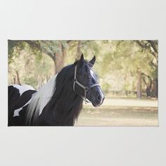 Stunning Gypsy Vanner in Color Area & Throw Rug