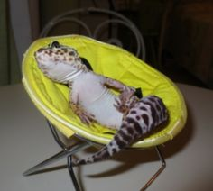 Geckos As Pets For Your Kids