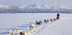 portale della Norvegia - Slitta trainata dai cani a Kvaløya nel Troms, Norvegia del nord - Foto: Bård Løken/NordNorsk Reiseliv