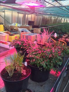 Plants, Horticulture, Lighting, Flora, Plant