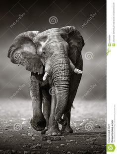 Resultado de imagen para elefante
