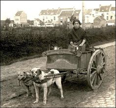 25 Interesting Vintage Pictures of Dog Carts and Milk Women in Belgium from the Late and Early Centuries ~ vintage everyday Vintage Pictures, Dog Pictures, Dog Of Flanders, Famous Dogs, War Dogs, Dog Stories, Weird And Wonderful, Working Dogs, People