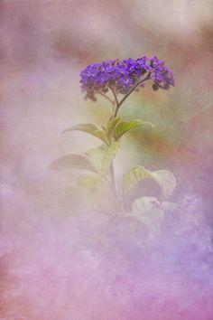 Seeing Through by Kathleen Clemons