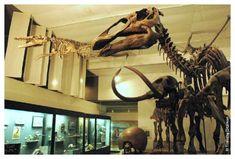 9. University of Wisconsin Geology Museum - Madison