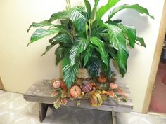 Live peace lily plant with pumpkins, gourds, and fall leaves around the base of it. Gourds, Pumpkins, Peace Lily Plant, Fall Leaves, Base, Holiday, Plants, Fun, Autumn Leaves