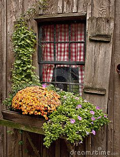 Cottage window with flowers and vines and wonderful red and white gingham curtains
