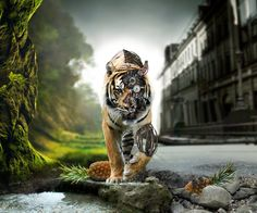 Animated HD Tiger Tablet PC Wallpapers Wallpapers Backgrounds