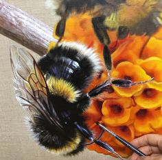 In my studio today painting luscious bumblebees. Love those furry wonders! http://ift.tt/2tw3w8c - #inmystudio #melbournelife #melbourneartist #bumblebee #oilpainting #oilonlinen #australianartist #australianart #gatesofparadise #gbartconsulting #annemiddleton #pollenator #bee