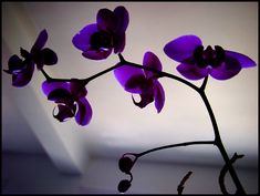 Perfect purple style of flowers