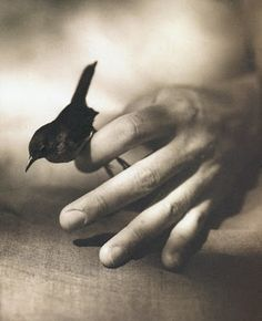 Victor Schrager House Wren From The Bird Hand Book