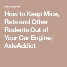 How to Keep Mice, Rats and Other Rodents Out of Your Car Engine   AxleAddict