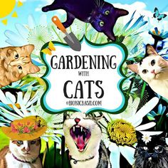 Basil's Blog: Welcome To Our Furst Gardening with Cats! And What...