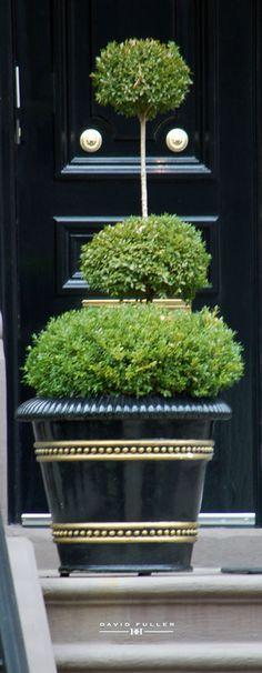 Black door and Topiary