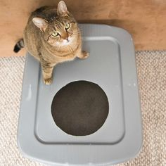 Cat Training Litter Box Original-DIY-Mess-Free-Cat-Litter-Box - While I'd like for you all to think that Miss Josie is trulythis photogenic, I had to bribe her with a piece of turkey held over her head. Diy Mosquito Repellent, Diy Litter Box, Diy Toy Storage, Space Cat, Diy Toys, Cool Cats, Free Cat, Pet Care, Cats And Kittens