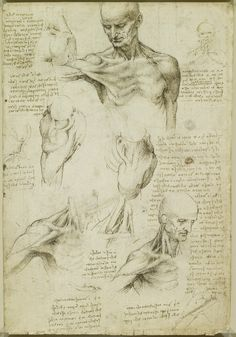 """scienceisbeauty: """"Happy 564 birthday, Leonardo, we miss you. """" Recto: The superficial anatomy of the shoulder and neck. Verso: The muscles of the shoulder - Pen and ink with wash, over black chalk """" Via the Royal Collection Trust Also at Google..."""