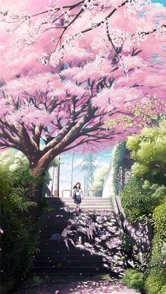 Find the best Anime Cherry Blossom Wallpaper on GetWallpapers. We have background pictures for you! Art Anime, Anime Kunst, Anime Artwork, Manga Art, Manga Anime, Kawaii Anime, Anime Pokemon, Anime Cherry Blossom, Cherry Blossoms