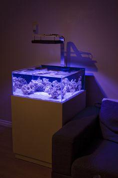 Saltwater Aquarium Setup, Coral Reef Aquarium, Aquarium Ideas, Marine Fish Tanks, Cool Tanks, Tanked Aquariums, Living Room Lighting, Shallow, Betta