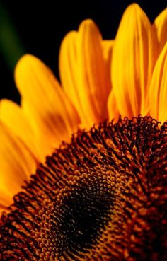 Mastering Flower Photography « The Photoletariat
