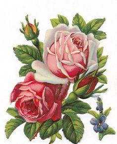 roses  Postal rosas vintage.