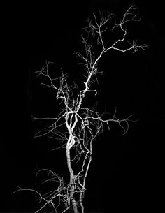 Taiyo Onorato and Nico Krebs #fineart #photography More at http://joshcampbellphoto.com/blog/ Source: http://www.americansuburbx.com/2015/02/a-confrontation-of-resemblances-onorato-krebs-lightning-tree.html