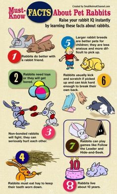 Infographic about Pet Rabbits