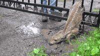 Saving Bambi (I love this gif)