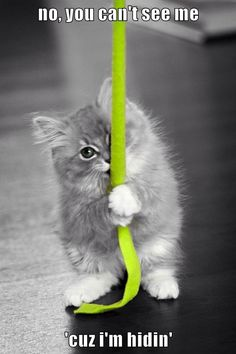 Ragdoll Kitten w/ green color splash Cute Kittens, Ragdoll Kittens, Cats And Kittens, Baby Cats, Baby Animals, Cute Animals, Animal Babies, Splash Photography, Color Photography