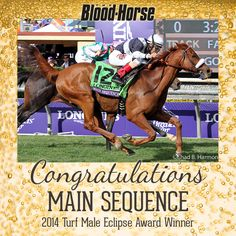 Congratulations to 2014 Turf Male Eclipse Award Winner Main Sequence!