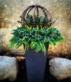 Winter Planters containing Lit grapevine wrapped spheres, Citrus Eucalyptus, Lime berry spray and lit mixed greens. By: Andrew VanHarken Outdoor Christmas Planters, Christmas Urns, Outdoor Planters, Outdoor Christmas Decorations, Garden Planters, Holiday Decor, Xmas, Boxwood Planters, Planters Flowers