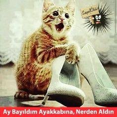 Hayat sevince, paylaşınca güzel !!! #sosyalöküz #öküz #komik #çok #çokkomik #resim #resimler #eğlence #eğlenceli #mizah #gülümse #gül #kahkaha #neşe #neşesi #ara #bul #ençok #okunan #popüler #beğen #espri #fıkra #oku
