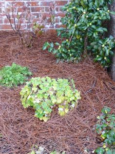 How To Mulch And Avoid Mistakes. Good Mulches/Types   Bad Mulches/Types    Ugly Mulches/Types | Backyard Lovinu0027 | Pinterest | Gardens, Garden Mulch  And ...