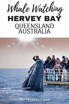 How to choose a Hervey Bay whale watching tour and why you should put Hervey Bay in Queensland Australia on your bucket list. australia The Ultimate Guide to Whale Watching in Hervey Bay Australia Tourism, Australia Travel Guide, Visit Australia, Queensland Australia, South Australia, Coast Australia, Victoria Australia, Western Australia, Whale Migration