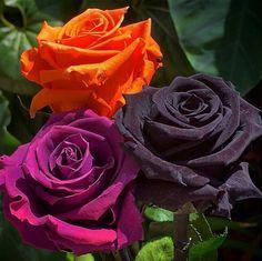 #mulpix  #Repost @argarrigos with @repostapp ・・・  #best_wonderful_flowers  #topfleur  #total_flowers  #flowerstalking  #arte_of_nature  #macroclique  #natura_friends  #inspiring_shot  #phx_flowers  #favv_flowers  #mc2m_flowers  #la_macromini  #capturehub  #magical_beauties  #macro_globe  #flowersandmacro  #splendid_flowers  #bestflowerspics  #florecitas_mx  #bomdever_flower  #total_roses  #amazing_flowerz  #fever_flowers  #top_favourite_flowers  #macroflowers_kingdom…