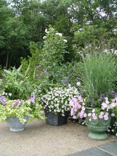 The big pots have grass, a broad leaved bamboo, and a tall dahlia as centerpieces.  The pastel petunias have that same loose weedy look as the grassy beds.  One would never suspect this planting was photographed in late September.