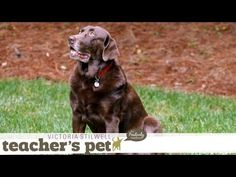 ▶ Learning the Stay Cue | Teacher's Pet With Victoria Stilwell - YouTube