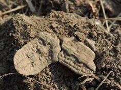 Trefliket spenne trefoil brooch viking age vikingtid