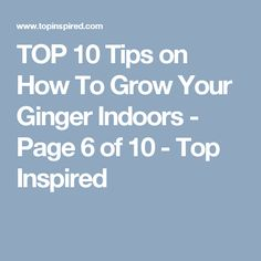 TOP 10 Tips on How To Grow Your Ginger Indoors - Page 6 of 10 - Top Inspired