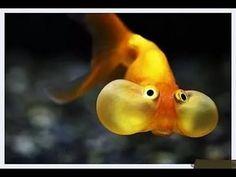 Рыбалка просто треш!!! Приколы в тренде!!! Карп кишит! Нарезка видео про...