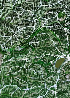 """belas-imagens: """" Fruit trees swirl on the hills of Huelva, Spain. The climate here is ideal for this growth with an average temperature of 17.8° C (64° F) and a relative humidity between 60% and 80%. """""""