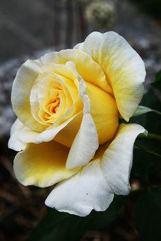 Rose...for Momma. Her favorite.