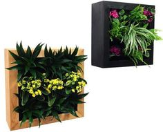 GSky Retail Living Wall Planter & Vertical Gardens traditional-indoor-pots-and-planters