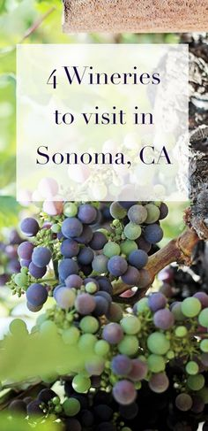 4 awesome (and cheap!) wineries to visit in Sonoma County / Healdburg in wine country + my secret tip to score free wine tastings.