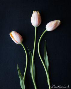 Simple tulip flower arrangement: ideas and tips - Cloverhome Tulips Flowers, Growing Flowers, Flower Arrangements, Simple, Floral, Tips, Blog, Ideas, Floral Arrangements
