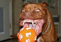 That dog sure is pretty excited about that ball!
