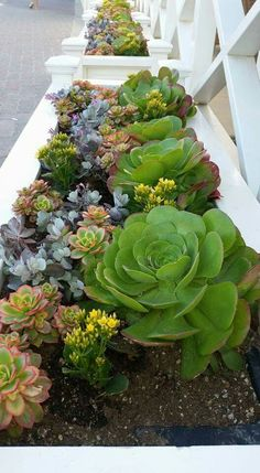 Easy Desert Landscaping Tips That Will Help You Design A Beautiful Yard Succulent Landscaping, Succulent Gardening, Cacti And Succulents, Planting Succulents, Succulent Ideas, Succulent Rock Garden, Container Gardening, Dry Garden, Fruit Garden