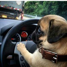 """It's my turn to drive, Linda!"""