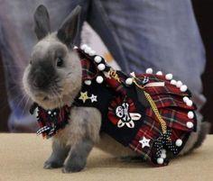 A kilted bunny!