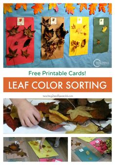 """After reading """"Going on a Leaf Hunt"""", collect leaves and sort them by color! Free printable cards for preschoolers for color recognition."""