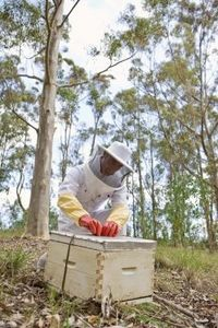 bee keeping  Our son and daughter-in-law are starting this project this year.